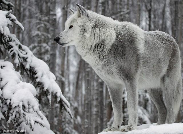 rex_wolf.jpg